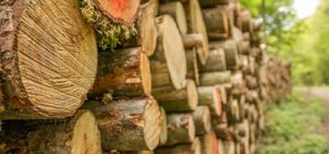 Picture of logs